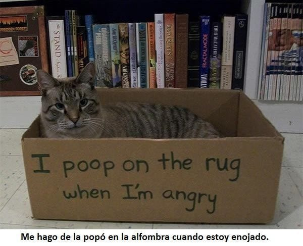 animales-culpables-51