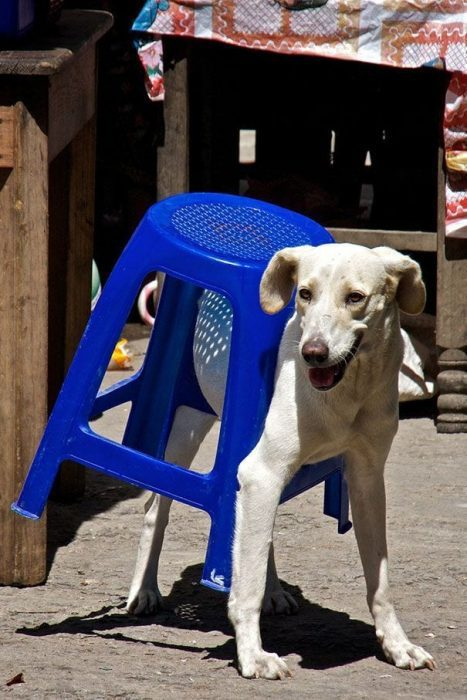 animales-muebles-posturas-30