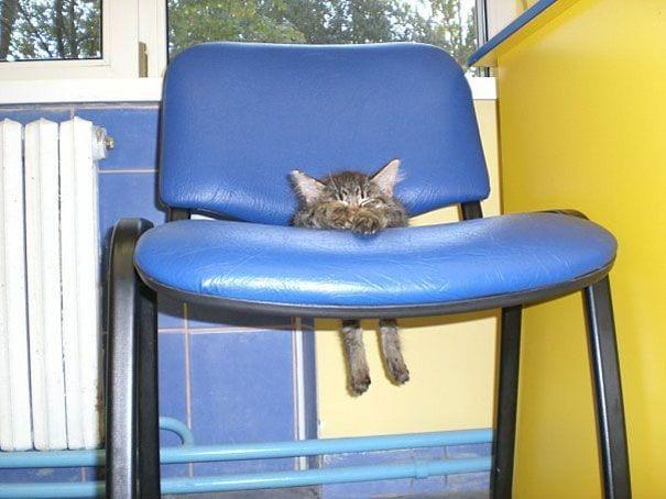 animales-muebles-posturas--5