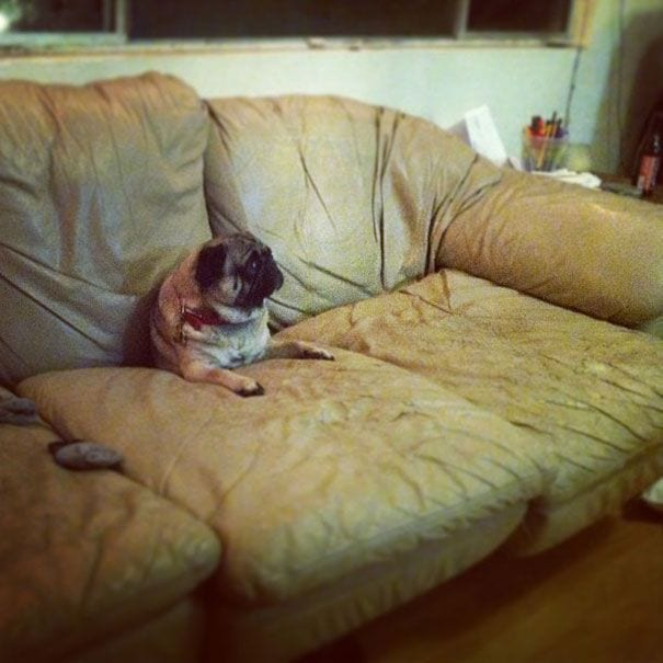 animales-muebles-posturas-9