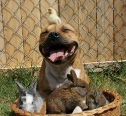 boxer-y-conejos