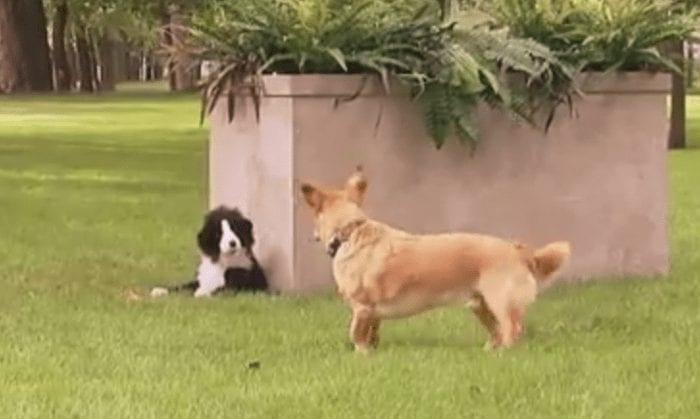 broma perros