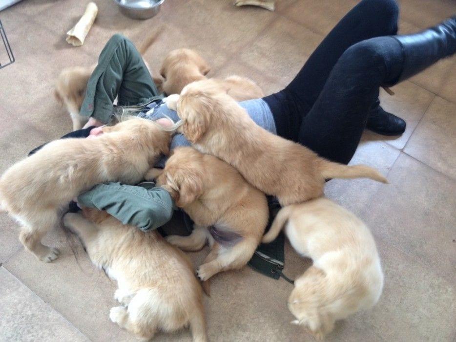 cachorros 1