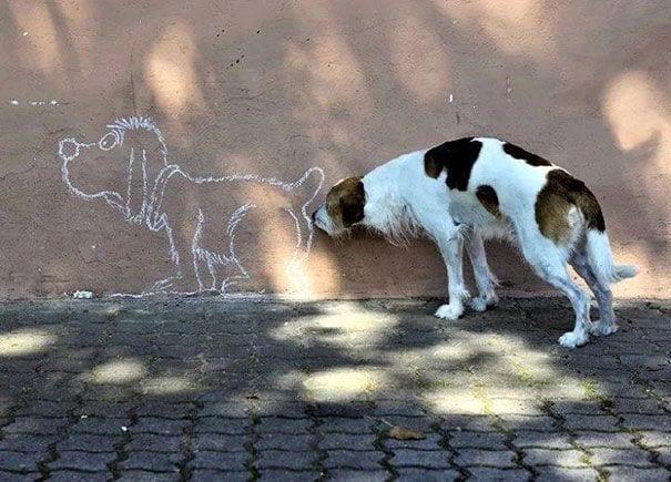 fotos-momento-justo-perros-01
