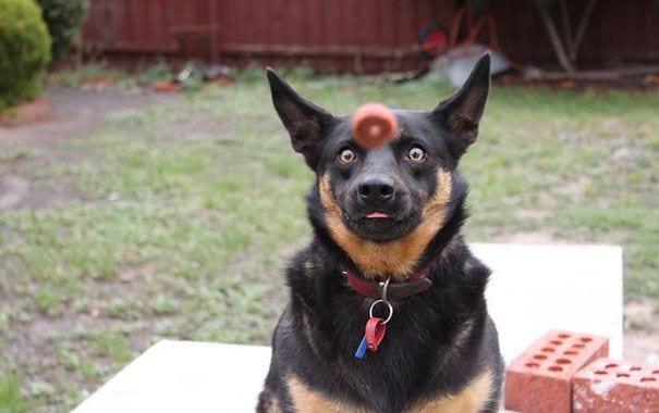 fotos-momento-justo-perros-06