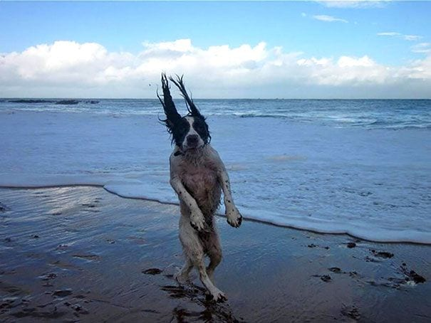 fotos-momento-justo-perros-09