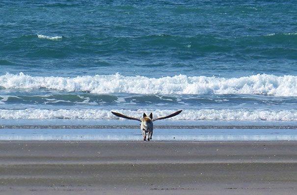 fotos increíbles de perros 11