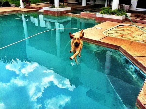 fotos increíbles de perros 24