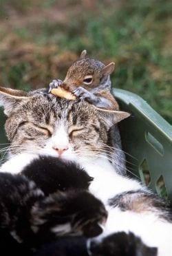 gato-y-ardilla