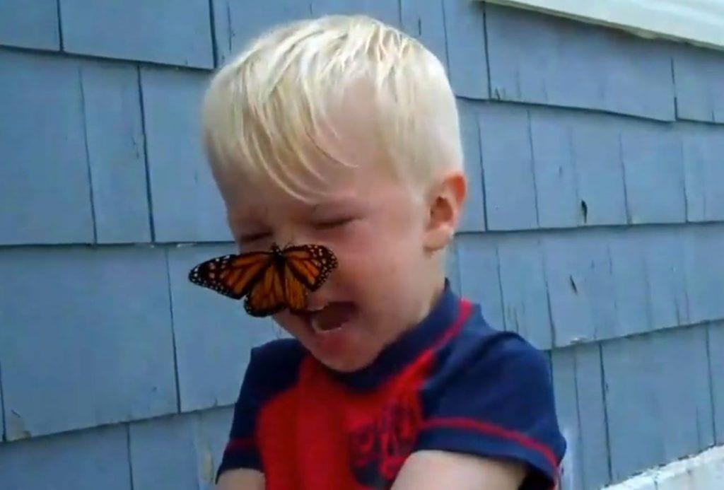 mariposa chico