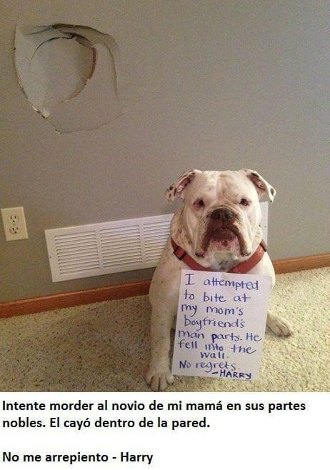 mascotas-culpables10