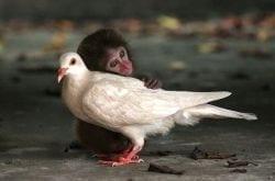 mono-y-paloma