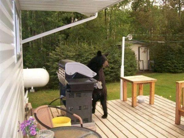 osos-actuando-como-personas-02