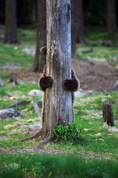 osos-actuando-como-personas-03