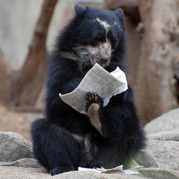 osos-actuando-como-personas-05