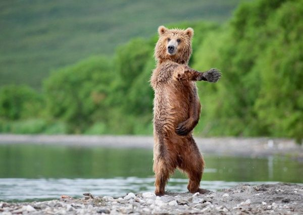osos-actuando-como-personas-07