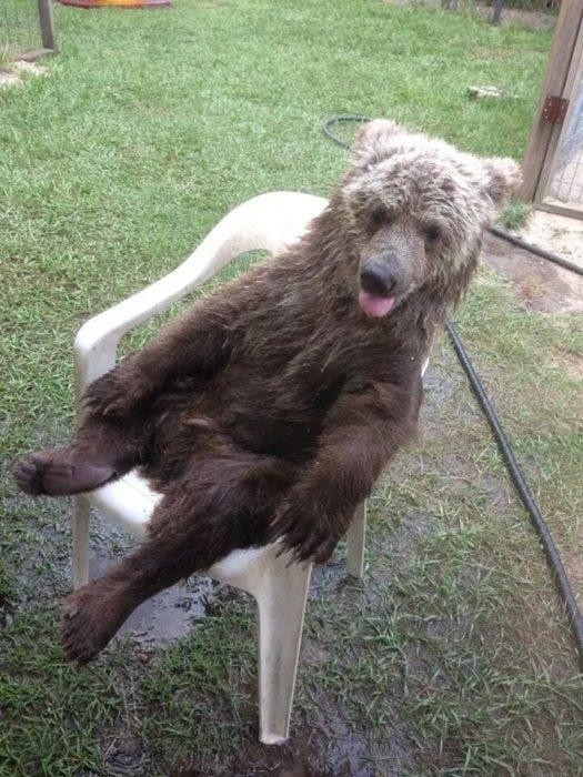osos-actuando-como-personas-12