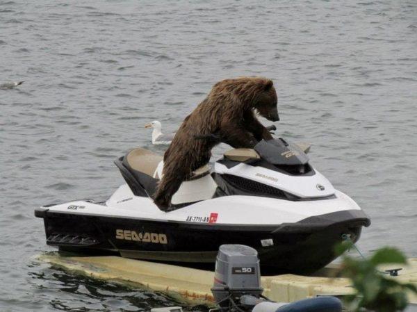 osos-actuando-como-personas-13