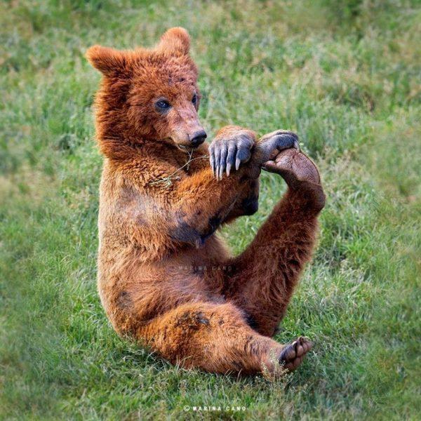 osos-actuando-como-personas-15