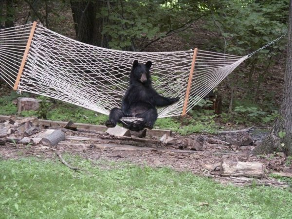 osos-actuando-como-personas-16