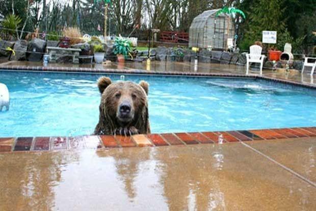 osos-actuando-como-personas-17