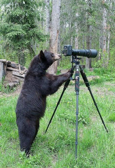osos-actuando-como-personas-18