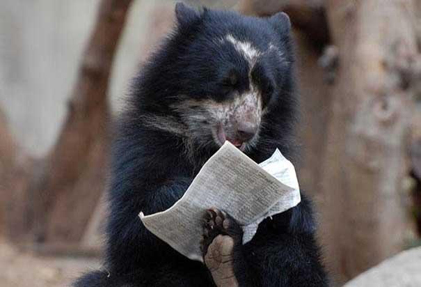 osos actuando como personas dest