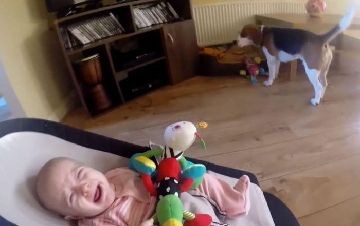 perro arrepentido de robar juguete bebe