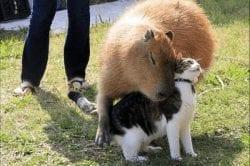 perro-de-pradera-y-gato