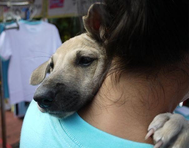 perros-11