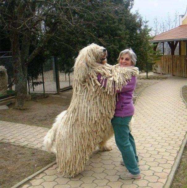 perros-19