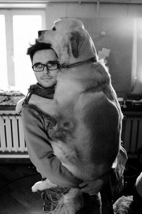 perros-3