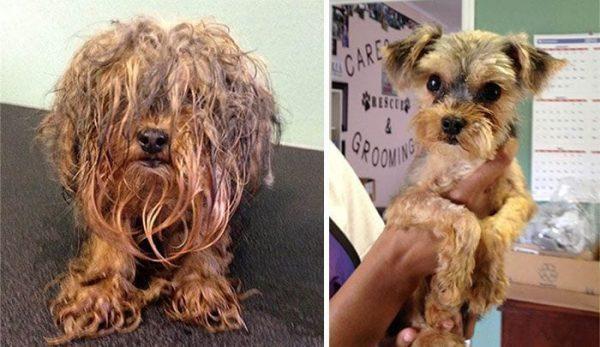 perros antes y despues 11