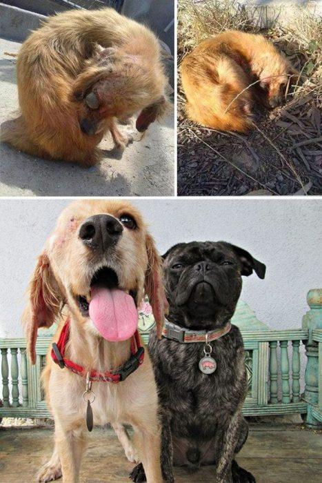 perros-antes-y-despues-12