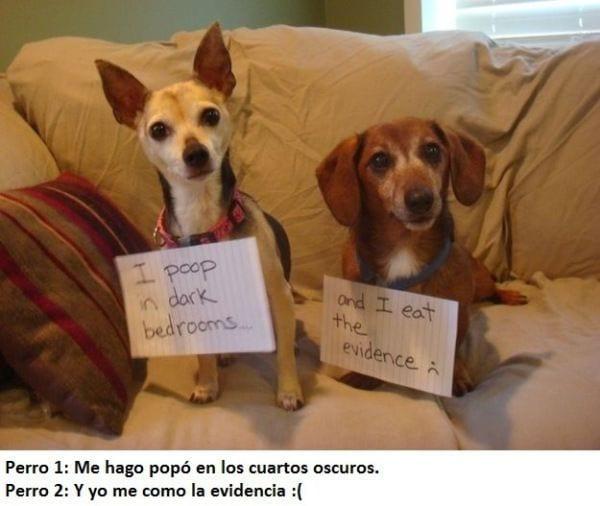 perros-arrepentidos-5