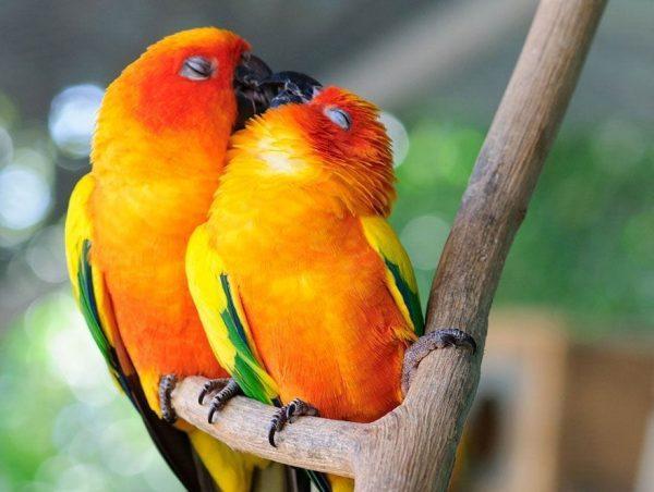 animales-besandose-1