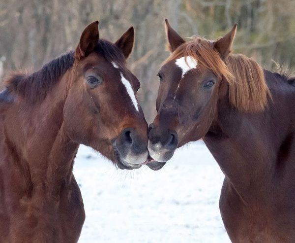 animales-besandose-11