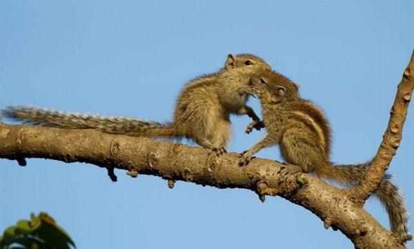 animales-besandose-13