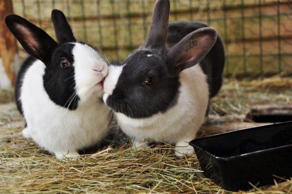 animales-besandose-14