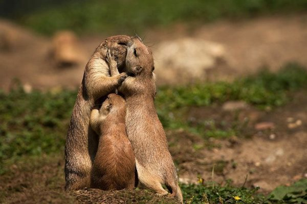 animales besandose 2