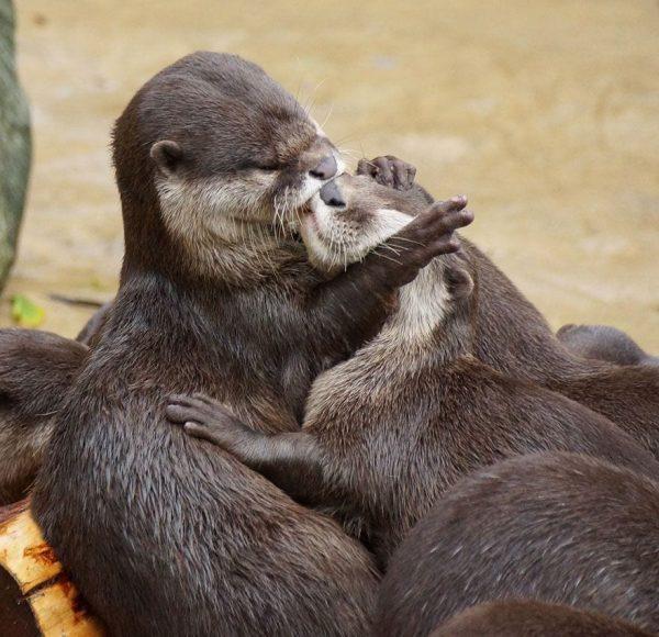 animales-besandose-8