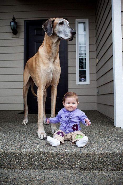 bebes-perros-0020