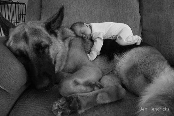 bebes-perros-01