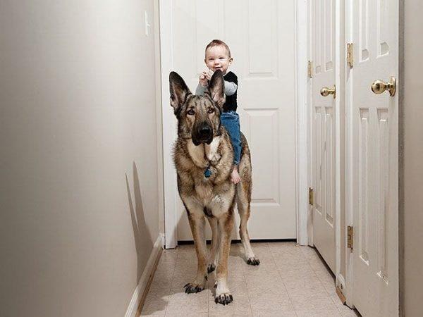bebes-perros-15