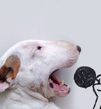 bull terrier destacada