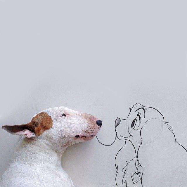 bull-terrier05