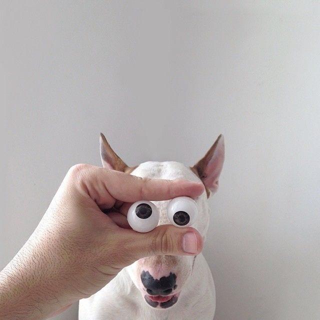 bull-terrier09