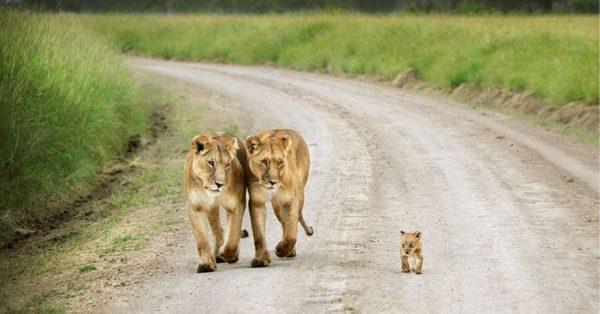 familias-padres-animales-02