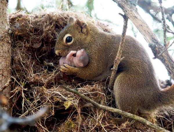 familias-padres-animales-07