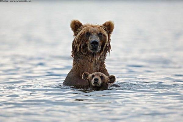 familias-padres-animales-08